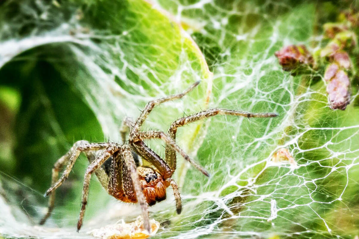 What spiders can teach us about the way we interact with the material world