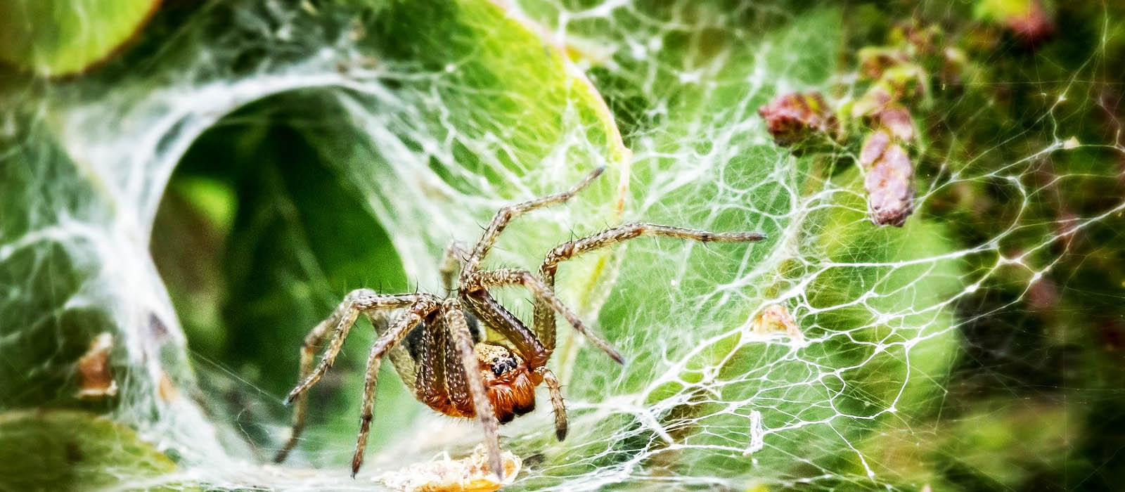 Lee más sobre el artículo Lo que nos pueden enseñar las arañas sobre la forma en la que interactuamos con el mundo material