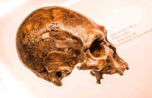 Lee más sobre el artículo Herencia neandertal en humanos modernos